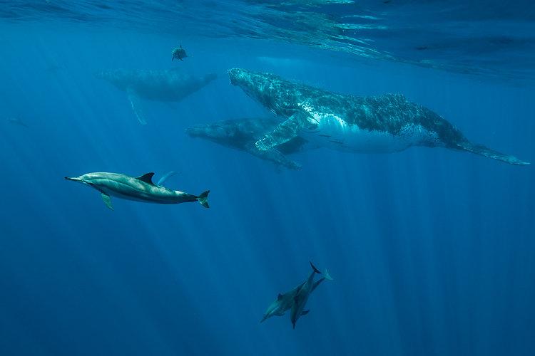 whales & dolphin ile de la reunion