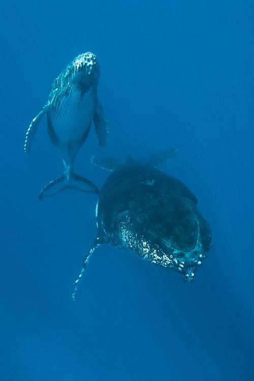 baleines ile de la reunion